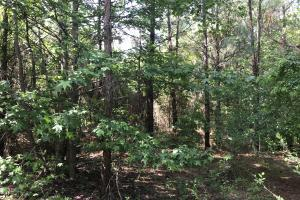 20+/- Acres Timberland & Deer Hunting in Grant, AR (5 of 6)