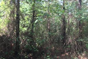 20+/- Acres Timberland & Deer Hunting in Grant, AR (4 of 6)
