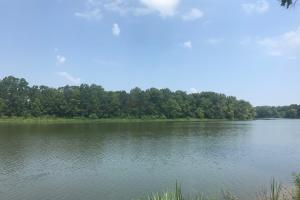 Black Warrior Bay Hunting Tract - Hale County AL