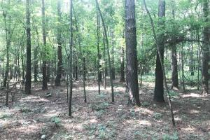 Black Warrior Bay Hunting Tract - Hale County, AL