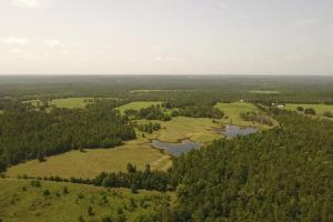 125 Acre Spacious Ranch/Recreational Tract - Polk County TX