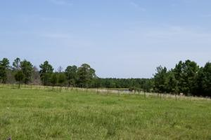 Spacious Ranch near Lake Livingston in Polk, TX (14 of 22)