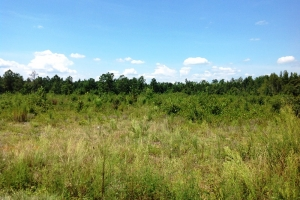 9.5 Acre Recreational & Timber Homesite - Marion County SC