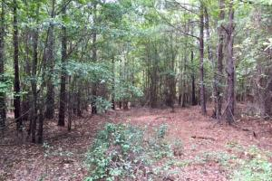 Marion County Hunting Tract in Marion, GA (5 of 23)