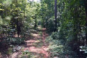 Marion County Hunting Tract in Marion, GA (9 of 23)