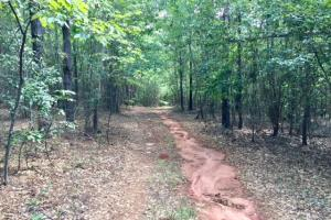 Marion County Hunting Tract in Marion, GA (11 of 23)