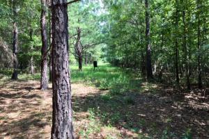 Marion County Hunting Tract in Marion, GA (22 of 23)