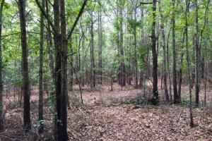 Marion County Hunting Tract - Marion County GA