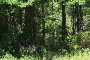 2.8 Acre Unrestricted Wooded Tract in Oconee, SC (2 of 8)