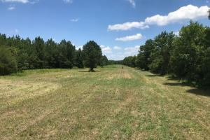 Bigbee Valley Hunting/ Potential Agriculture Tract in Noxubee, MS (8 of 15)