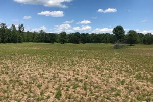 Bigbee Valley Hunting/ Potential Agriculture Tract in Noxubee, MS (9 of 15)