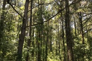 Bigbee Valley Hunting/ Potential Agriculture Tract in Noxubee, MS (12 of 15)
