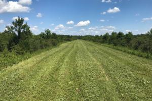 Bigbee Valley Hunting/ Potential Agriculture Tract in Noxubee, MS (3 of 15)