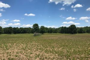 Bigbee Valley Hunting/ Potential Agriculture Tract in Noxubee, MS (10 of 15)