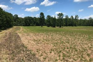 Bigbee Valley Hunting/ Potential Agriculture Tract - Noxubee County MS