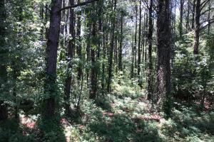 Bigbee Valley Hunting/ Potential Agriculture Tract in Noxubee, MS (4 of 15)