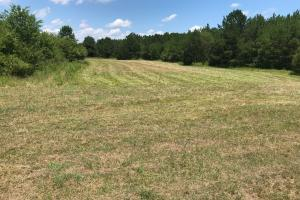 Bigbee Valley Hunting/ Potential Agriculture Tract in Noxubee, MS (7 of 15)