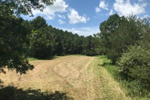 Bigbee Valley Hunting Tract - Noxubee County MS