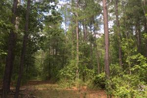 Cassatt Timber Tract - Kershaw County SC