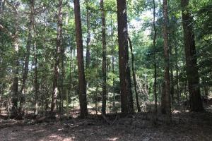 Smithdale Small Acreage with Highway Frontage in Amite, MS (3 of 4)