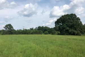 Georgiana Homesite & Pasture Land Investment - Butler County AL