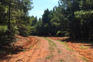 Locust Fork River Timber & Hunting Tract in Jefferson, AL (30 of 32)