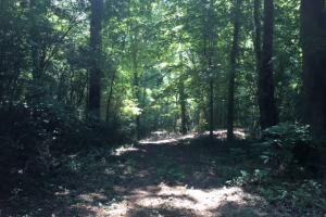 Locust Fork River Timber & Hunting Tract in Jefferson, AL (5 of 32)