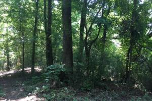 Locust Fork River Timber & Hunting Tract in Jefferson, AL (4 of 32)
