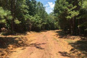 Locust Fork River Timber & Hunting Tract in Jefferson, AL (31 of 32)