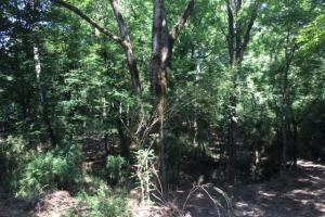 Locust Fork River Timber & Hunting Tract in Jefferson, AL (3 of 32)