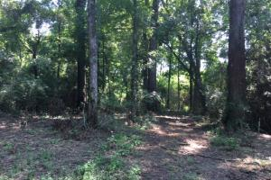 Locust Fork River Timber & Hunting Tract in Jefferson, AL (12 of 32)