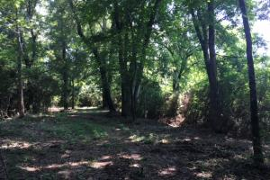 Locust Fork River Timber & Hunting Tract in Jefferson, AL (14 of 32)