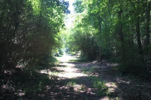 Locust Fork River Timber & Hunting Tract in Jefferson, AL (9 of 32)