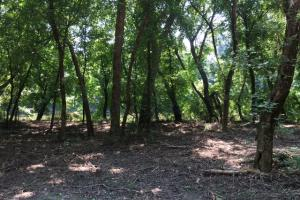Locust Fork River Timber & Hunting Tract in Jefferson, AL (17 of 32)