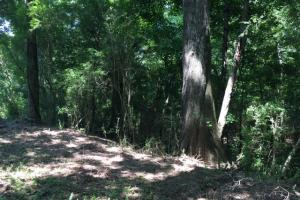 Locust Fork River Timber & Hunting Tract in Jefferson, AL (7 of 32)