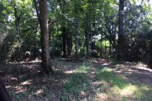 Locust Fork River Timber & Hunting Tract in Jefferson, AL (13 of 32)