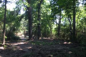 Locust Fork River Timber & Hunting Tract in Jefferson, AL (21 of 32)