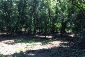 Locust Fork River Timber & Hunting Tract in Jefferson, AL (22 of 32)