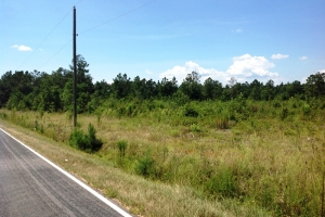 Sellers Recreational & Timber Homesite - Marion County SC