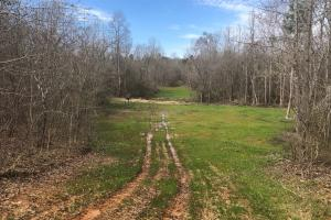 Food plot with feeder. (18 of 21)