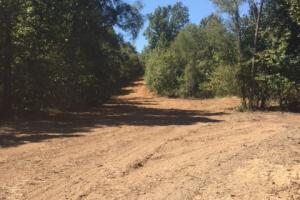New food plots and Dozer work cleaning up roads. (7 of 21)