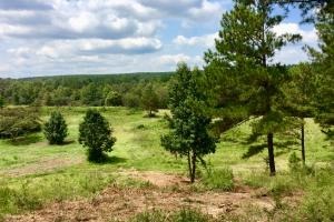 Jefferson County River Front Hunting & Timber Tract - Jefferson County AL