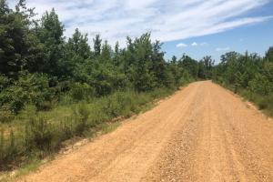 Webster County 80 Acres in Webster, MS (3 of 5)