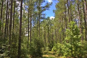 Walker Springs Hunting Camp and Timber Investment in Clarke, AL (21 of 33)