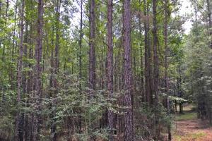 Walker Springs Hunting Camp and Timber Investment in Clarke, AL (15 of 33)