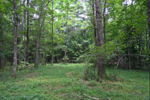 Walker Springs Hunting Camp and Timber Investment in Clarke, AL (24 of 33)