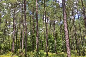 Walker Springs Hunting Camp and Timber Investment in Clarke, AL (13 of 33)