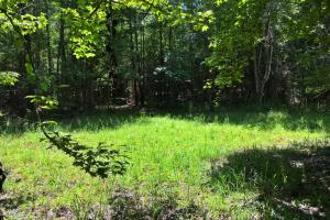 Walker Springs Hunting Camp and Timber Investment in Clarke, AL (27 of 33)
