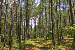 Walker Springs Hunting Camp and Timber Investment in Clarke, AL (14 of 33)