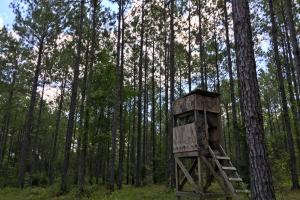 Walker Springs Hunting Camp and Timber Investment in Clarke, AL (17 of 33)